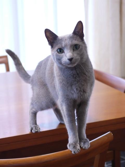猫のお留守番 ナナちゃん編。_a0143140_22402009.jpg