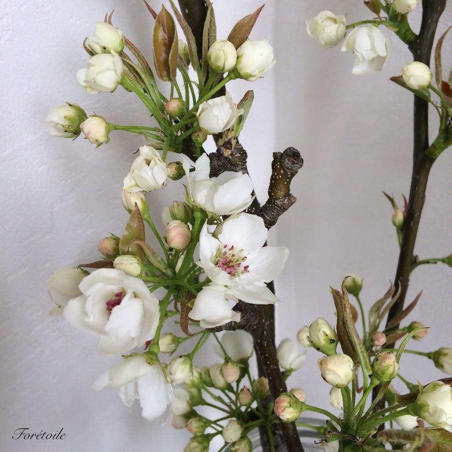 梨の花_f0377243_13144452.jpg