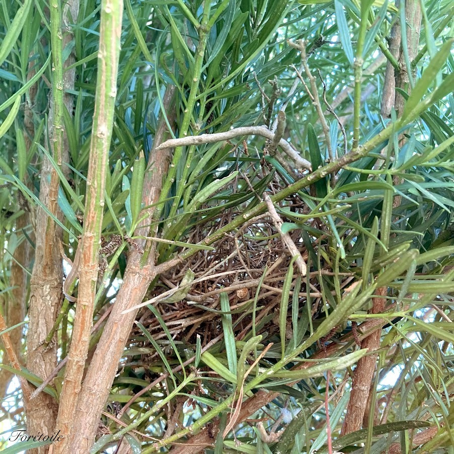 le nid d\'oiseau_f0377243_13464020.jpg