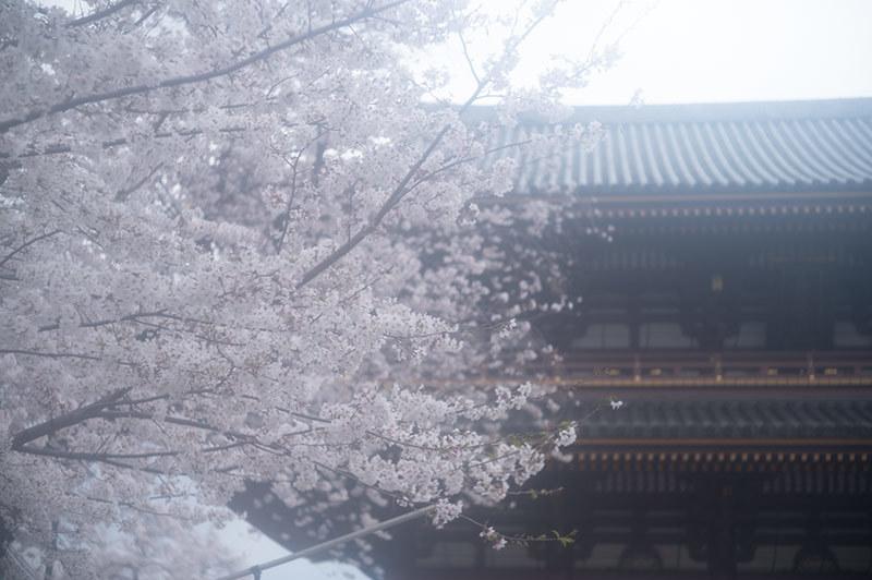 Hello from Tokyo 155 雨の池上_a0003650_22433818.jpg