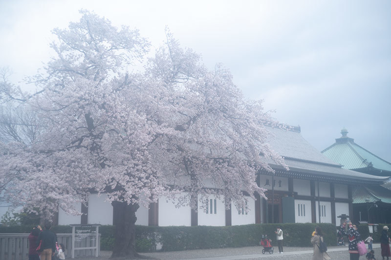 Hello from Tokyo 155 雨の池上_a0003650_22440954.jpg