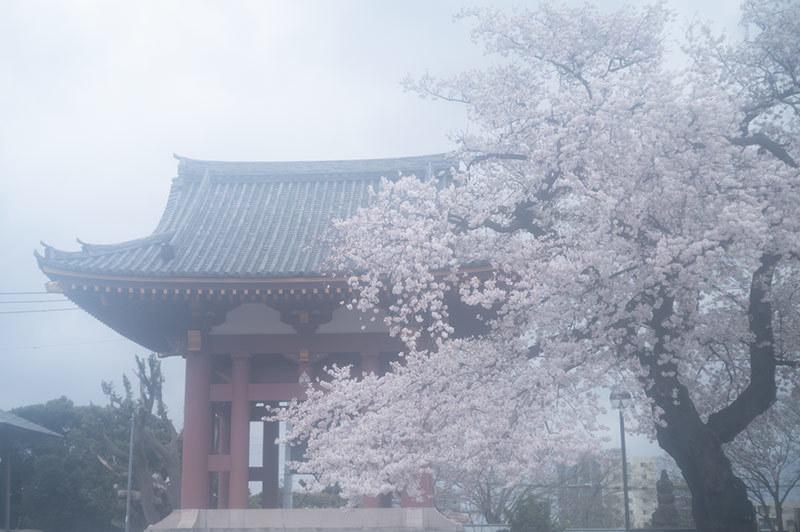 Hello from Tokyo 155 雨の池上_a0003650_22443442.jpg