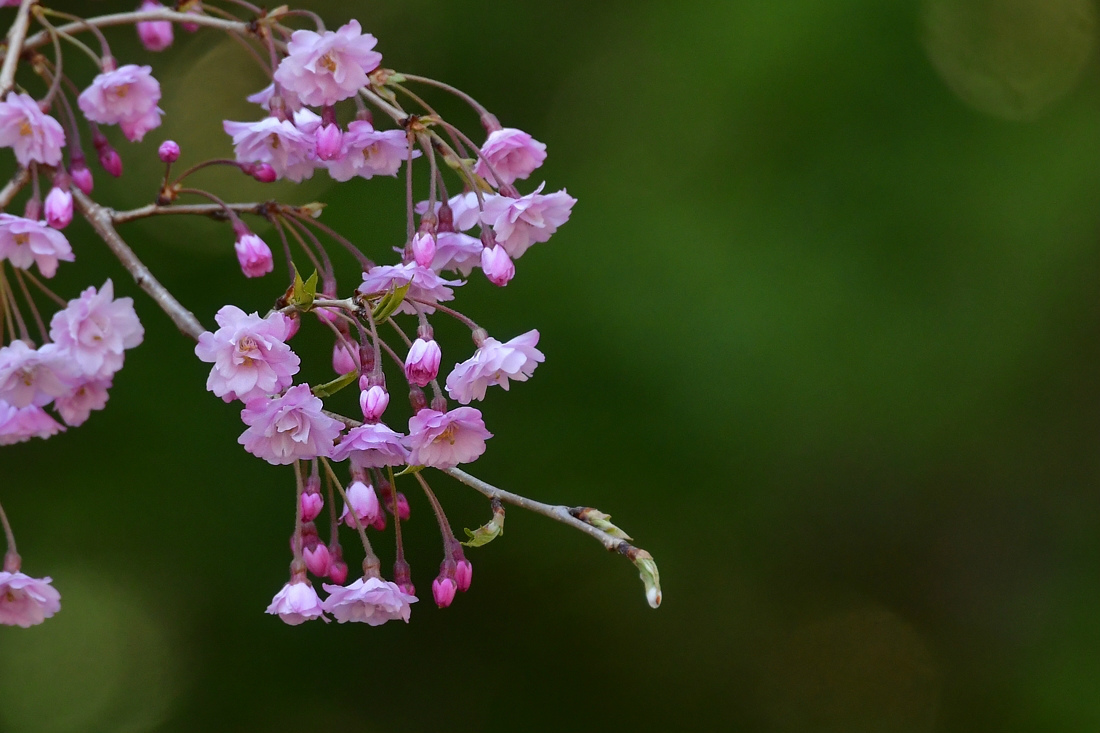 ちょっと一休み.......桜と花と蝶_f0400360_17513213.jpg
