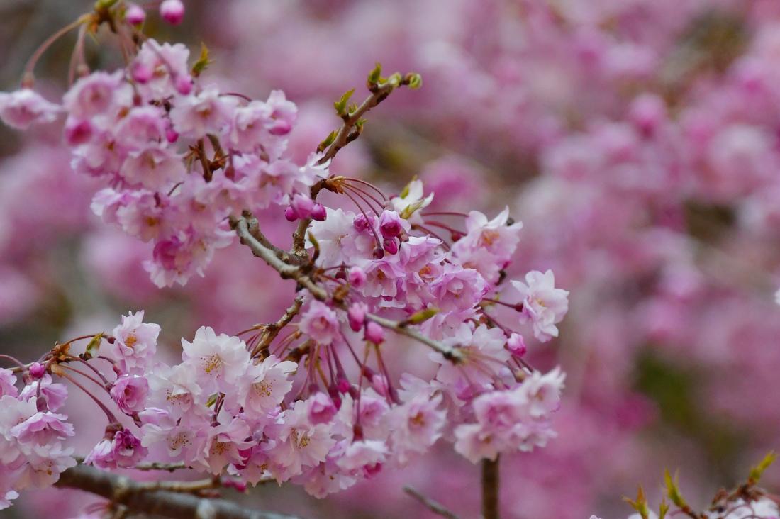 ちょっと一休み.......桜と花と蝶_f0400360_17514987.jpg