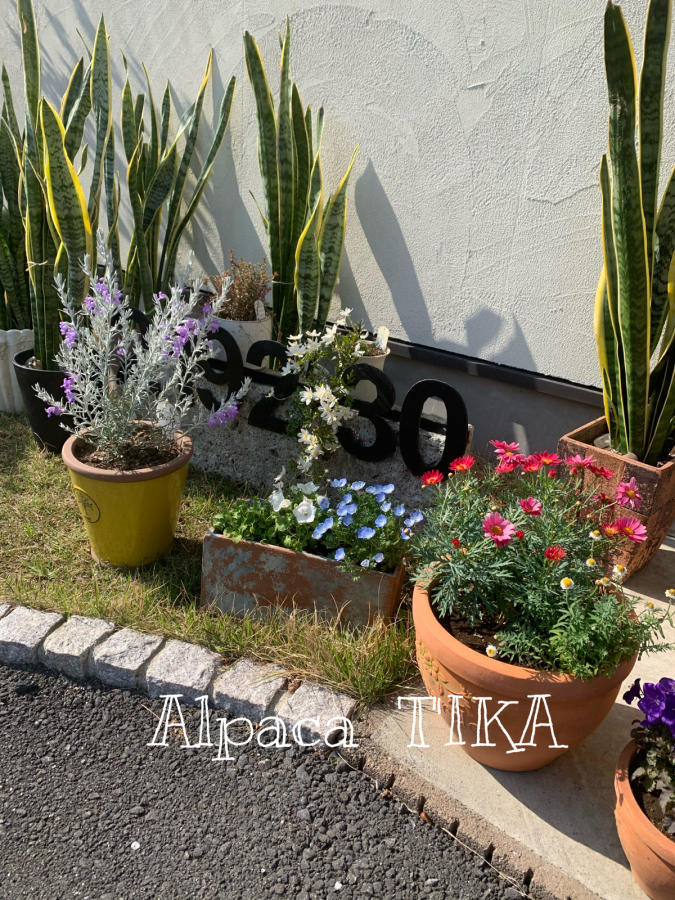 「T\'IKAの夏ふく」より おすすめのコットンシルク三角スカート_d0187468_16113380.jpg