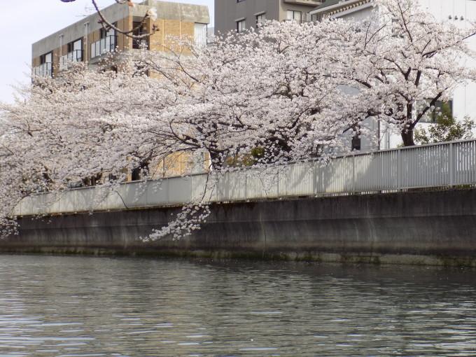 旧中川は春いっぱい_c0249569_11413064.jpg
