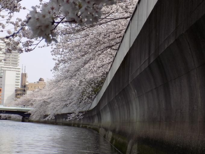 旧中川は春いっぱい_c0249569_11431075.jpg