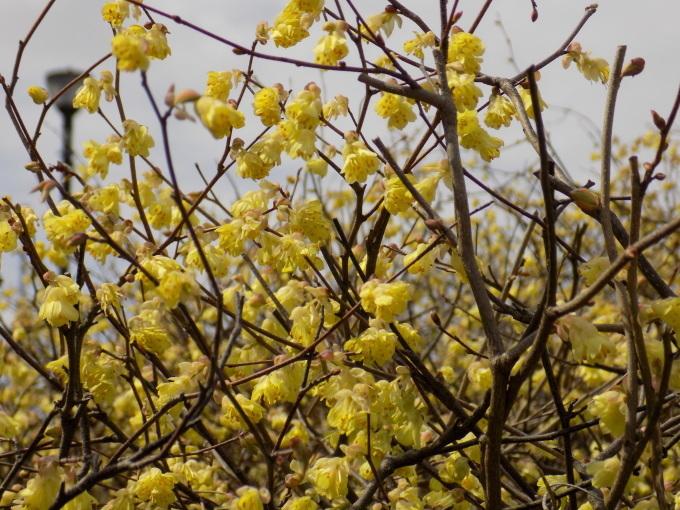 旧中川は春いっぱい_c0249569_11444388.jpg