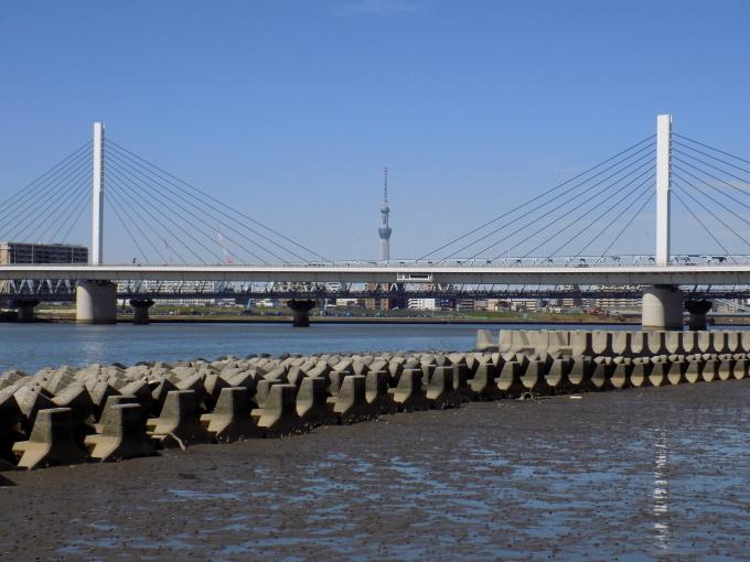 旧中川は春いっぱい_c0249569_11481685.jpg