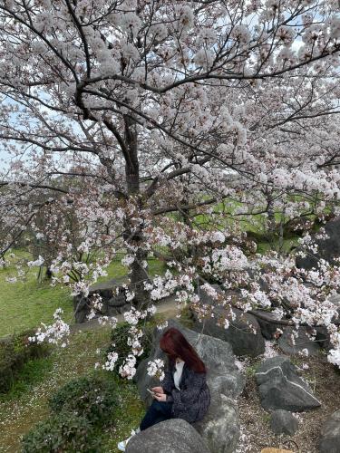 お花見⭐︎ピクニック弁当_a0142778_23342093.jpg