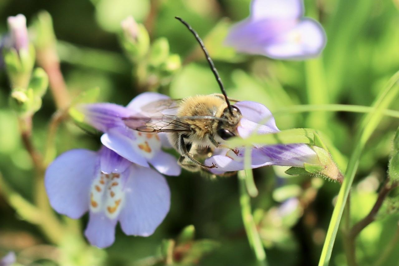 ミツバチに似てるけど・・・_d0121678_20364772.jpeg