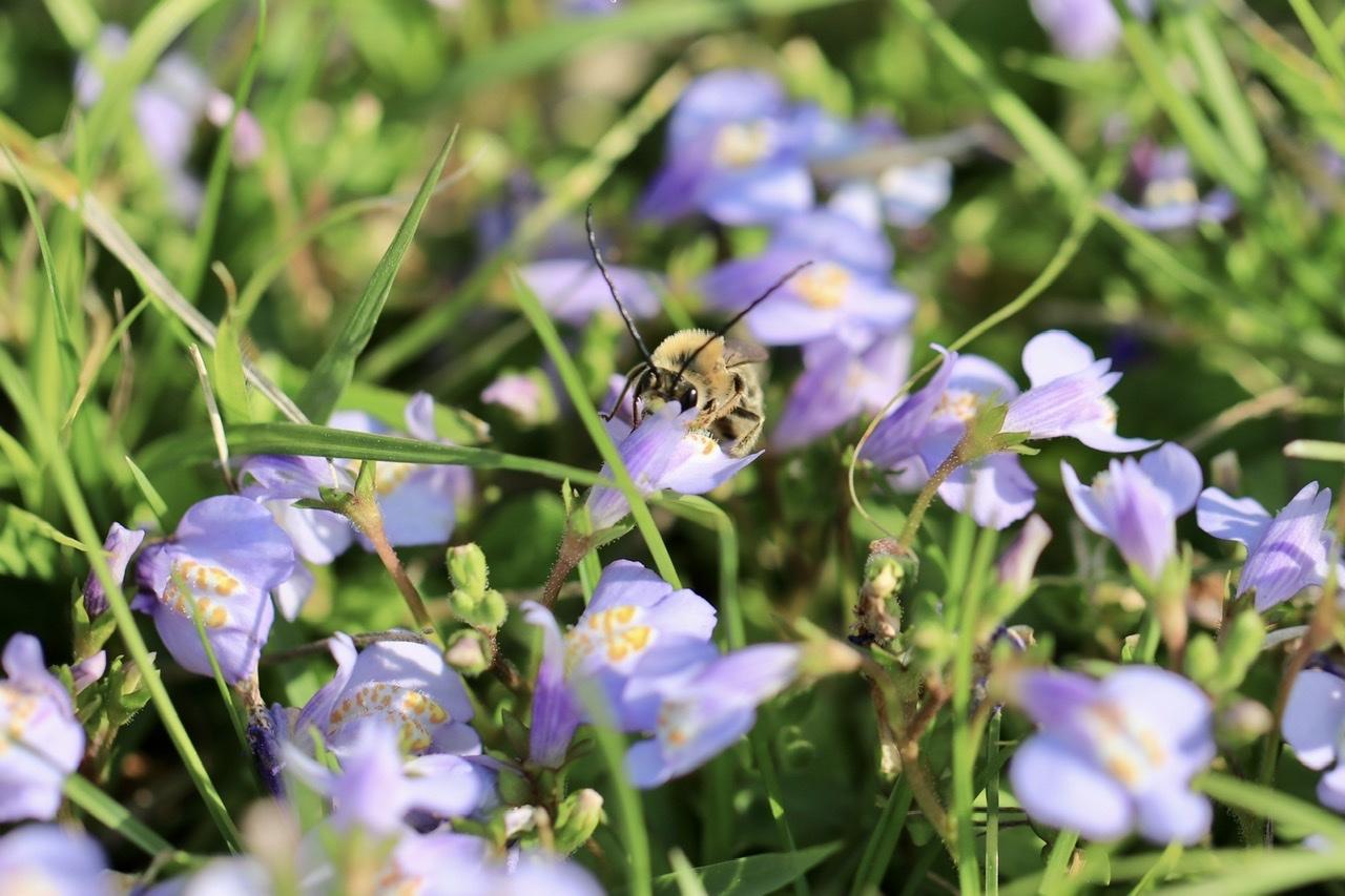 ミツバチに似てるけど・・・_d0121678_20432503.jpeg