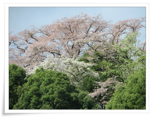 春の那須旅 2日目_d0174983_17481872.jpg