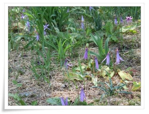 春の那須旅 2日目_d0174983_17482731.jpg
