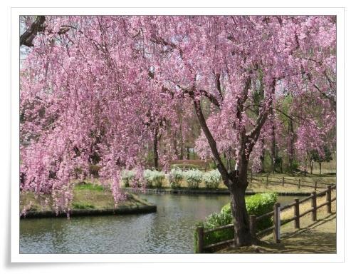 春の那須旅 2日目_d0174983_17484533.jpg
