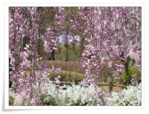 春の那須旅 2日目_d0174983_17484895.jpg