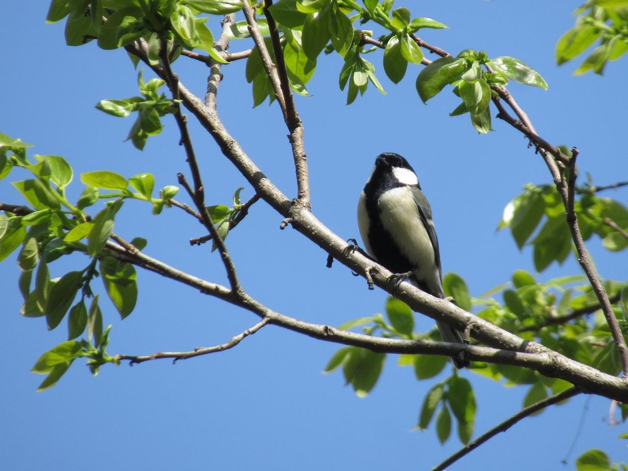 自然園の来訪者(鳥)_f0361087_11370389.jpg