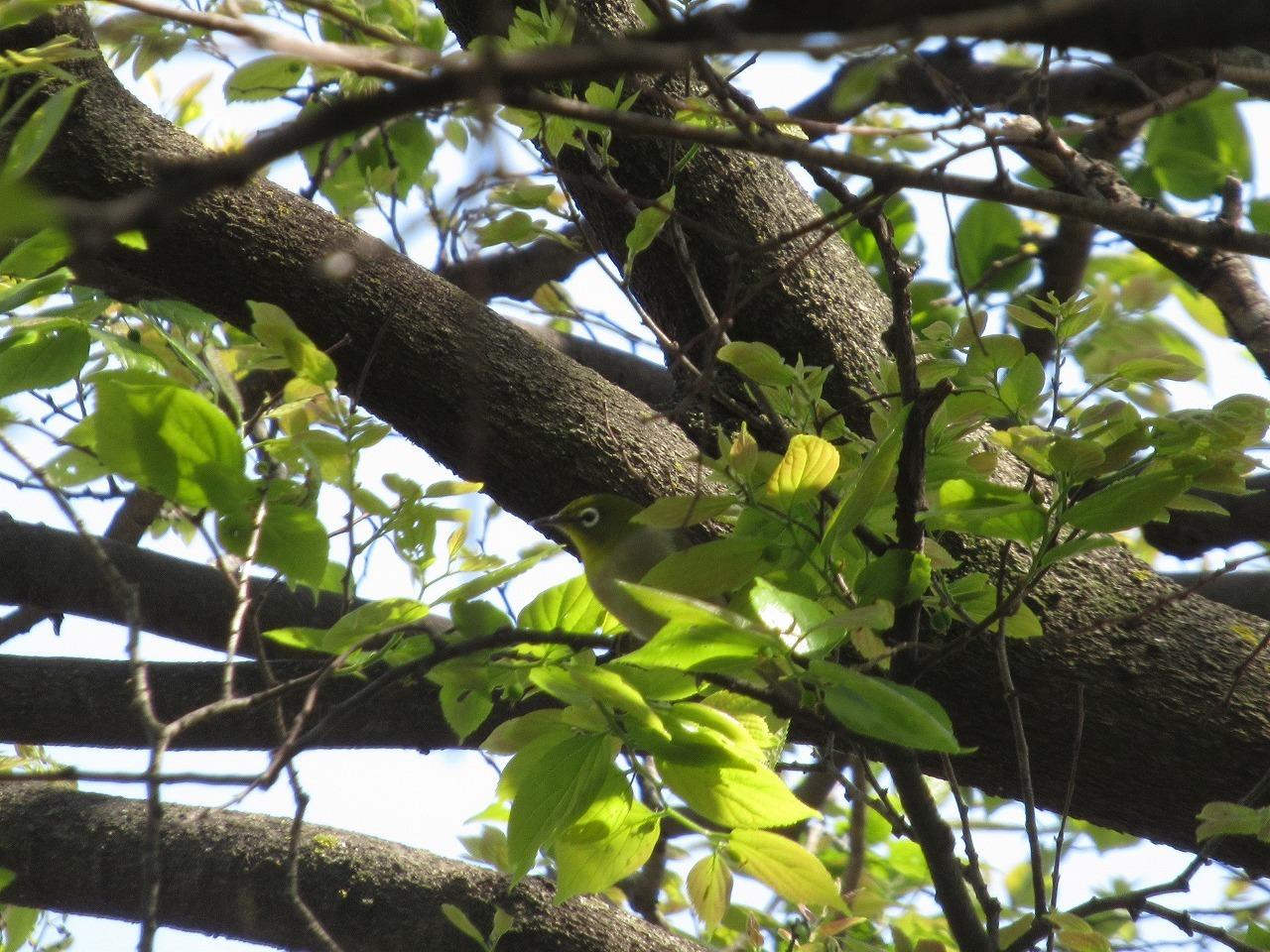 自然園の来訪者(鳥)_f0361087_11370419.jpg