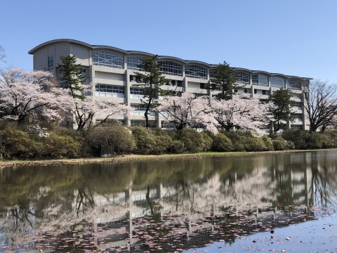 秋田も桜、咲きました。_f0319699_20092598.jpeg