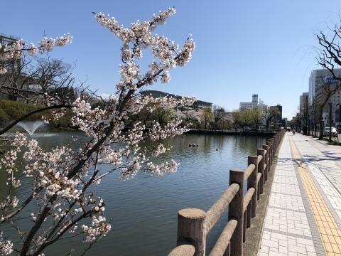 秋田も桜、咲きました。_f0319699_20103747.jpeg