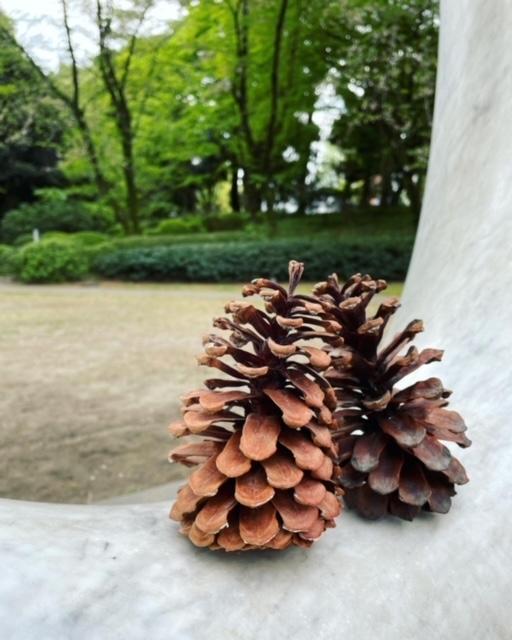 大好きな庭園美術館カフェ へ_d0339705_19292969.jpg
