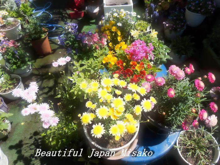 すべての苗を植え終わった~♡・゚☆、・:`☆・・゚・゚☆_c0067206_21252919.jpg