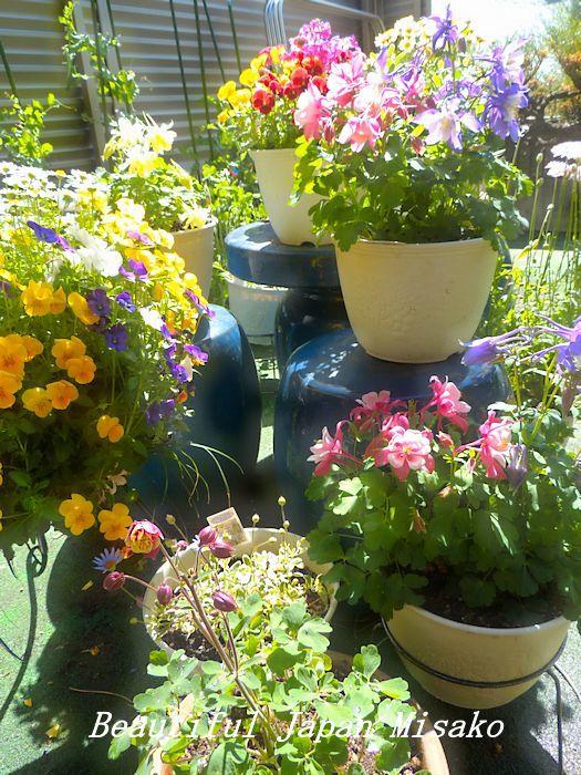 すべての苗を植え終わった~♡・゚☆、・:`☆・・゚・゚☆_c0067206_21253110.jpg