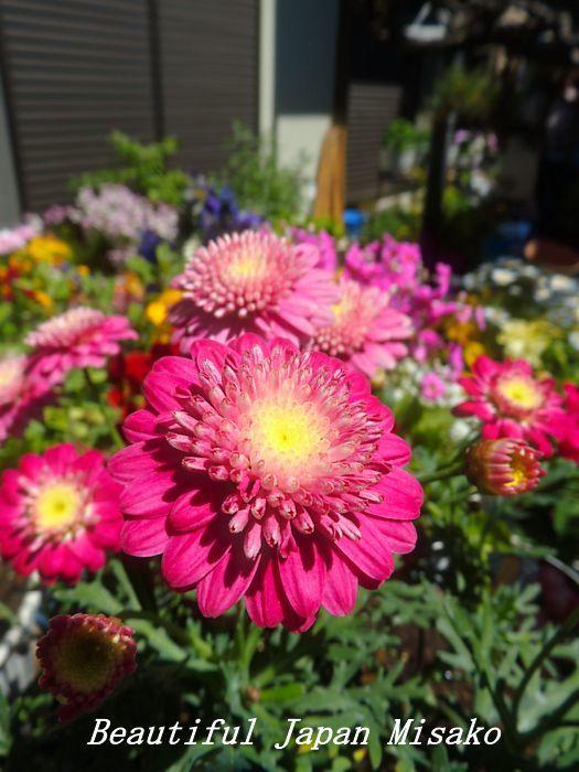 すべての苗を植え終わった~♡・゚☆、・:`☆・・゚・゚☆_c0067206_21253338.jpg