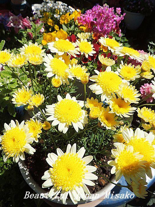 すべての苗を植え終わった~♡・゚☆、・:`☆・・゚・゚☆_c0067206_21253504.jpg