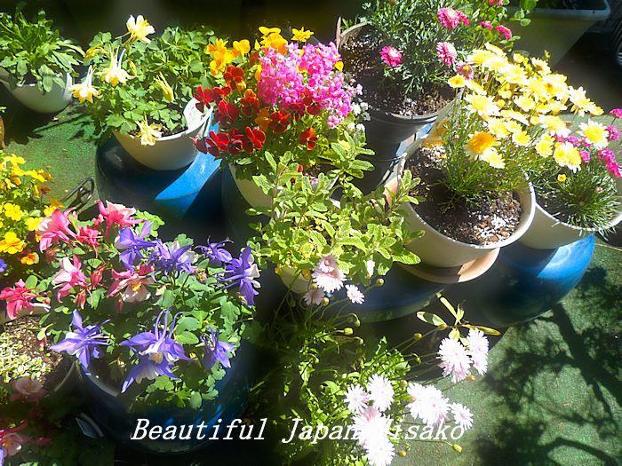 すべての苗を植え終わった~♡・゚☆、・:`☆・・゚・゚☆_c0067206_21254353.jpg