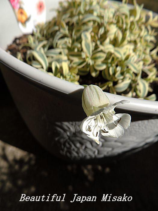 すべての苗を植え終わった~♡・゚☆、・:`☆・・゚・゚☆_c0067206_21255518.jpg
