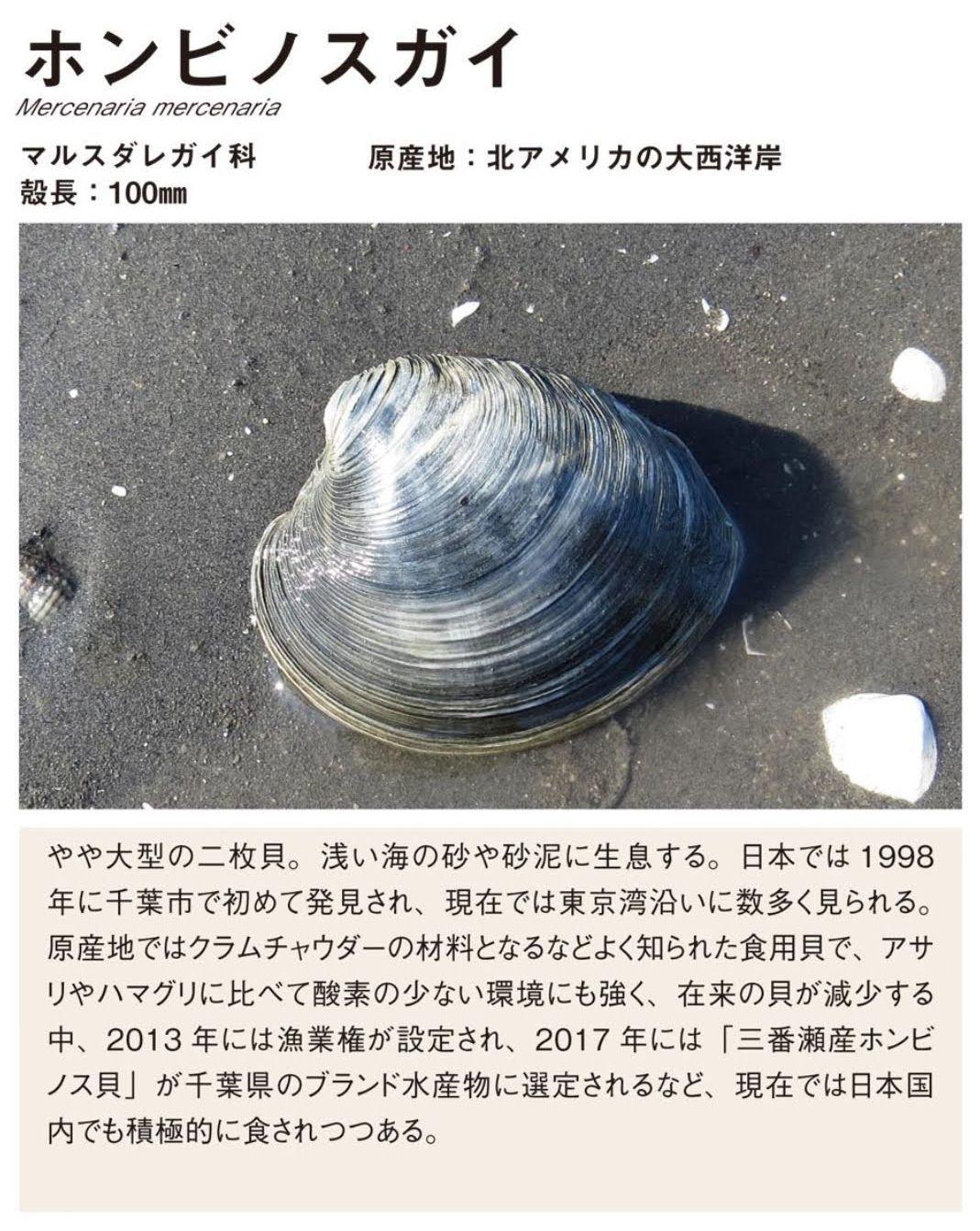 19℃になりました_c0025115_21391505.jpg