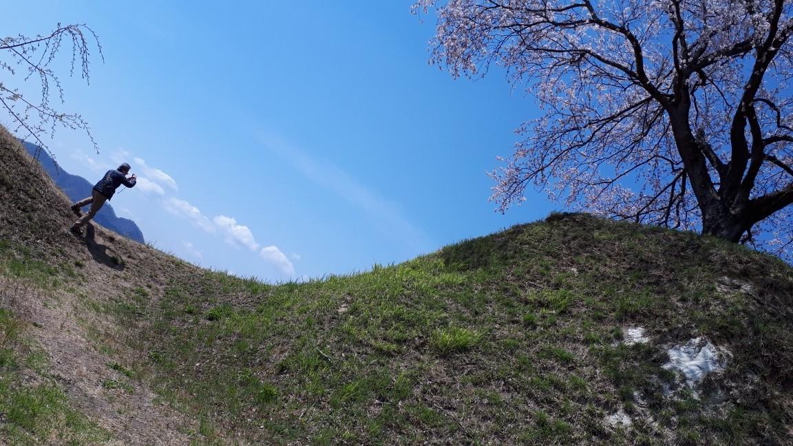 大衡城跡公園の桜_b0314043_15175959.jpeg