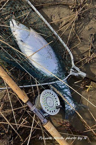 昨日の釣りとサクラ咲く_d0261148_18365077.jpg