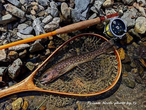 昨日の釣りとサクラ咲く_d0261148_18370226.jpg
