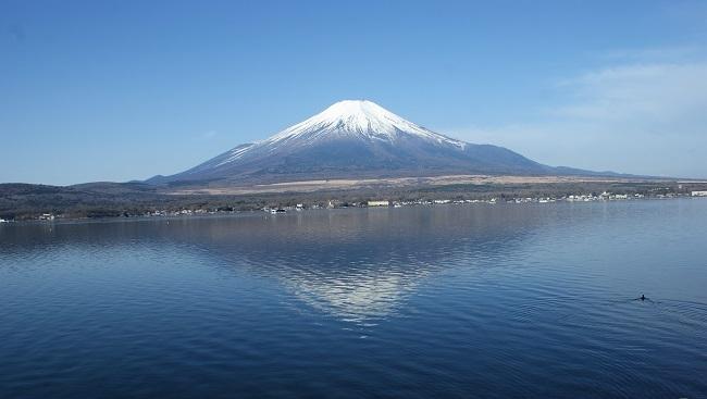 富士周辺も春がやってきました!桜が咲き始めました。【山中湖の富士山】_d0153860_16441511.jpg