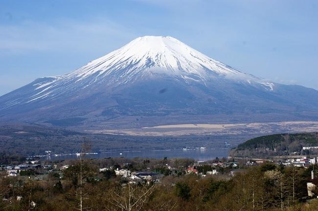 富士周辺も春がやってきました!桜が咲き始めました。【山中湖の富士山】_d0153860_16442563.jpg