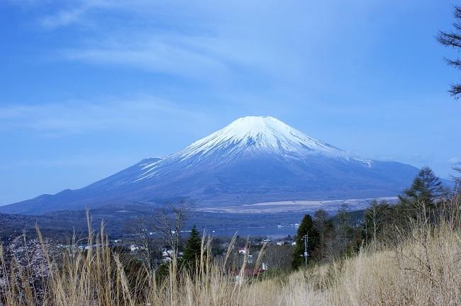 富士周辺も春がやってきました!桜が咲き始めました。【山中湖の富士山】_d0153860_16442950.jpg