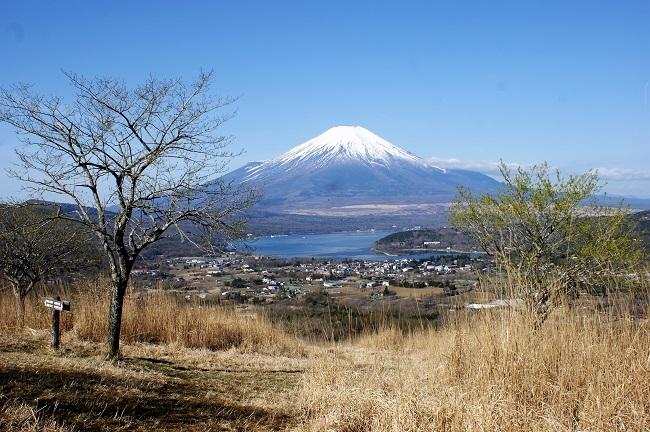 富士周辺も春がやってきました!桜が咲き始めました。【山中湖の富士山】_d0153860_16451231.jpg