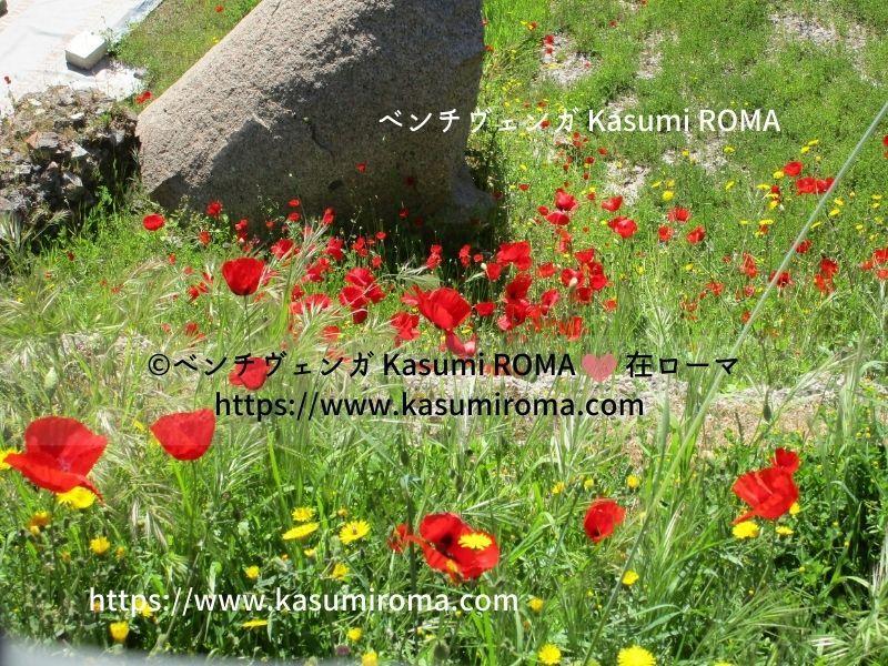 ローマ「真っ赤なポピー」の季節、到来♪ - 『ROMA』ローマ在住 ベンチヴェンガKasumiROMAの「ふぉとぶろぐ♪ 」