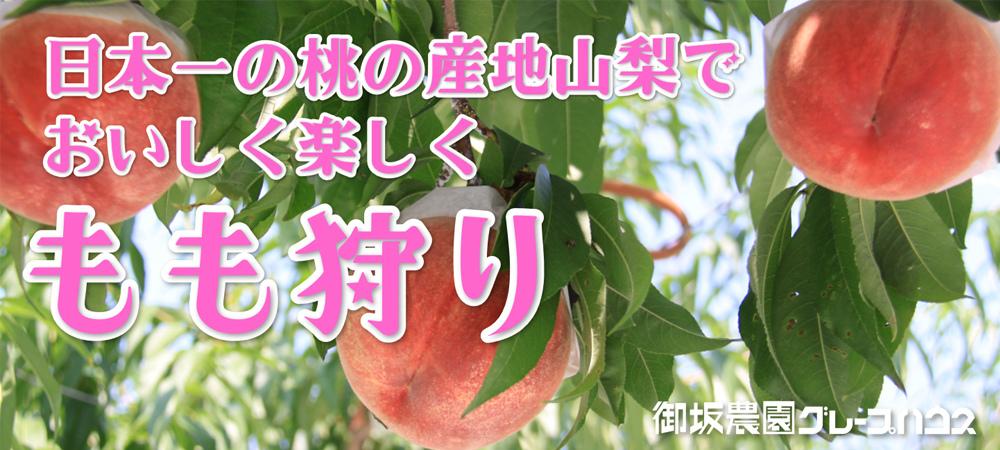 今年も果実狩りは御坂農園グレープハウスがおすすめです。_b0151362_16465313.jpg