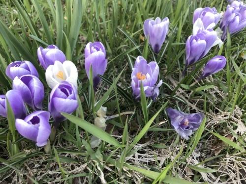 春を告げるお花_f0134670_01035263.jpeg