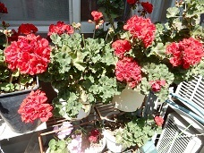 2021Apr.庭の花_a0350883_01175873.jpg