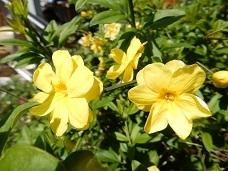 2021Apr.庭の花_a0350883_01201033.jpg