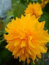 2021Apr.庭の花_a0350883_01210611.jpg