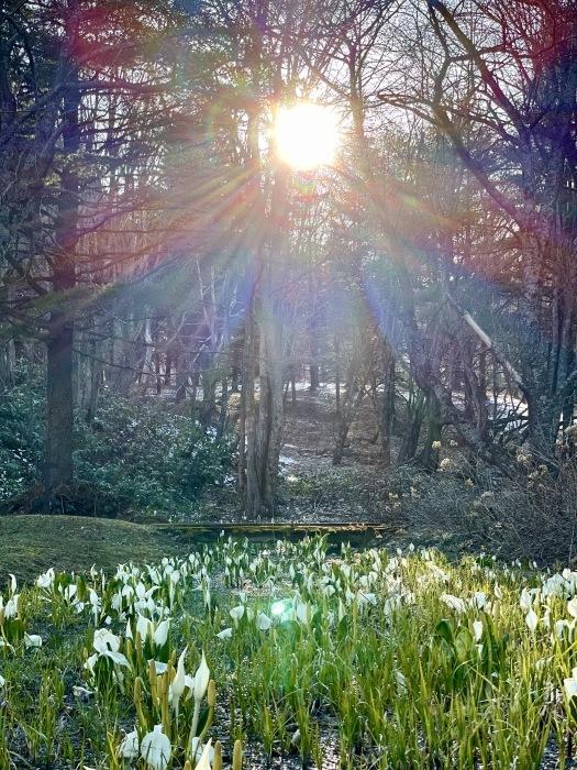 春の雪_d0077992_09551414.jpg