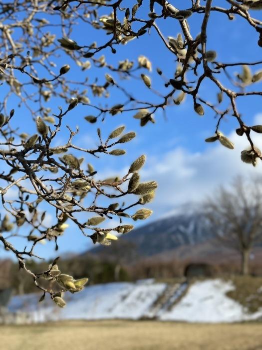 春の雪_d0077992_09554182.jpg