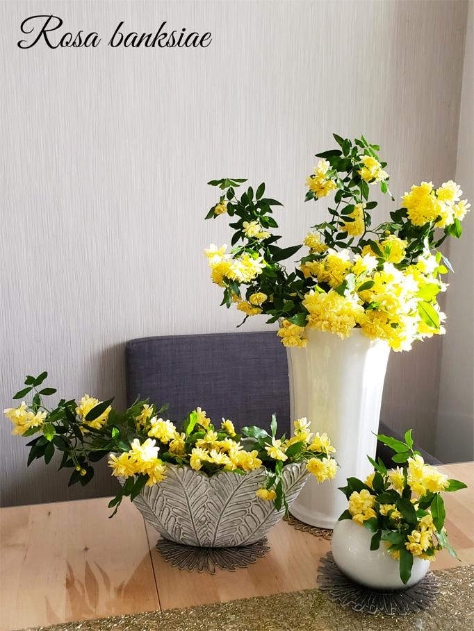 橋田壽賀子先生…木香薔薇に想いをのせて。_d0224894_16553918.jpg