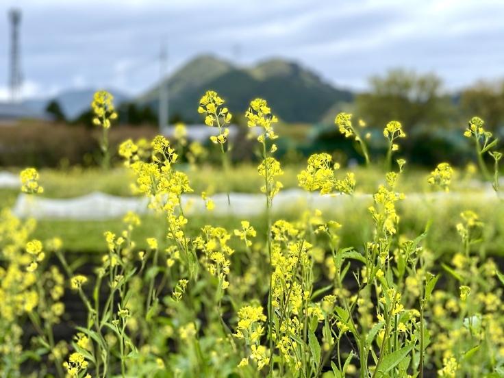 花と新緑の季節@宮ヶ瀬 - よく飲むオバチャン☆本日のメニュー
