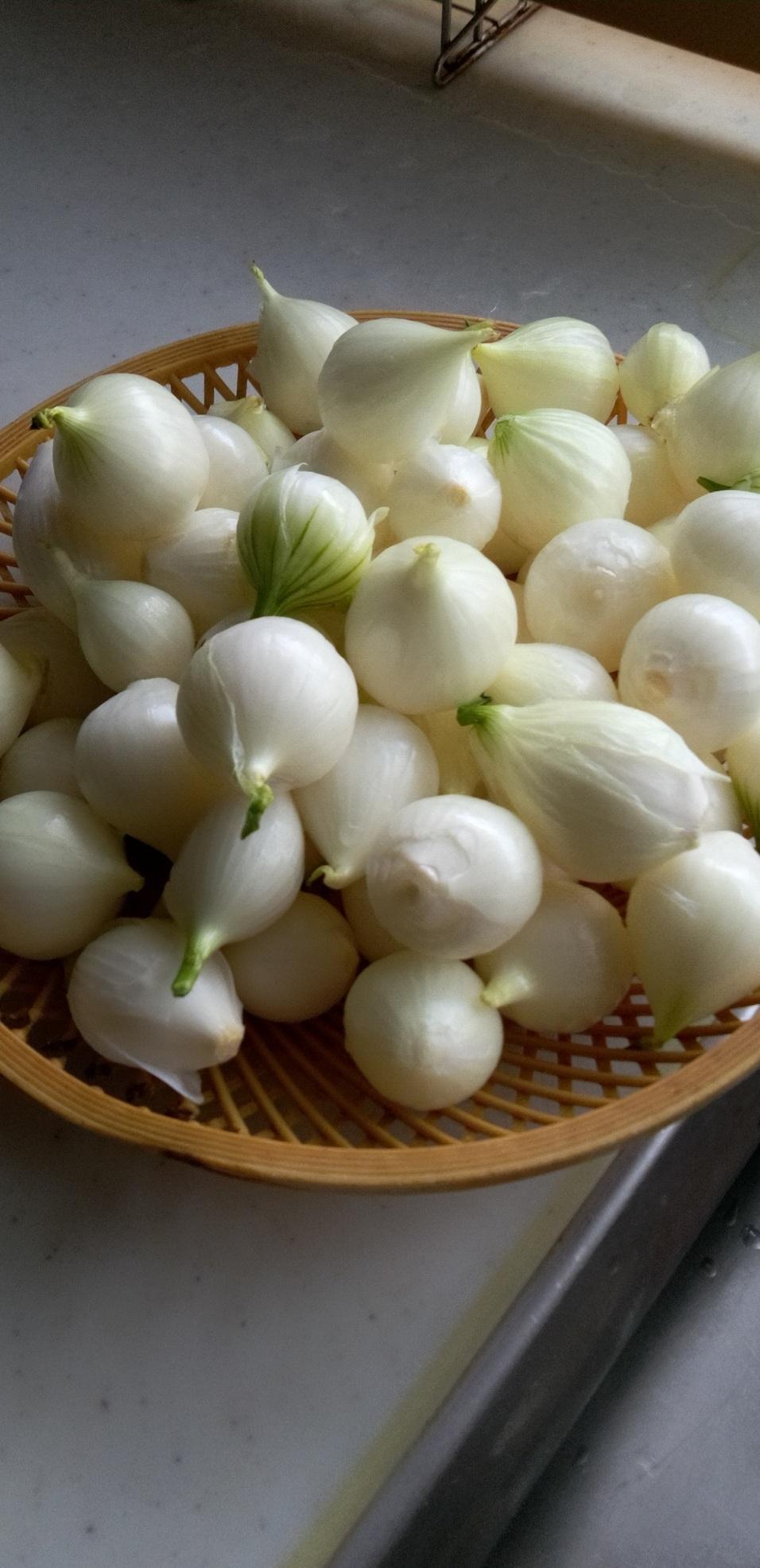 新玉ねぎのスープ作り_d0026905_17470103.jpg